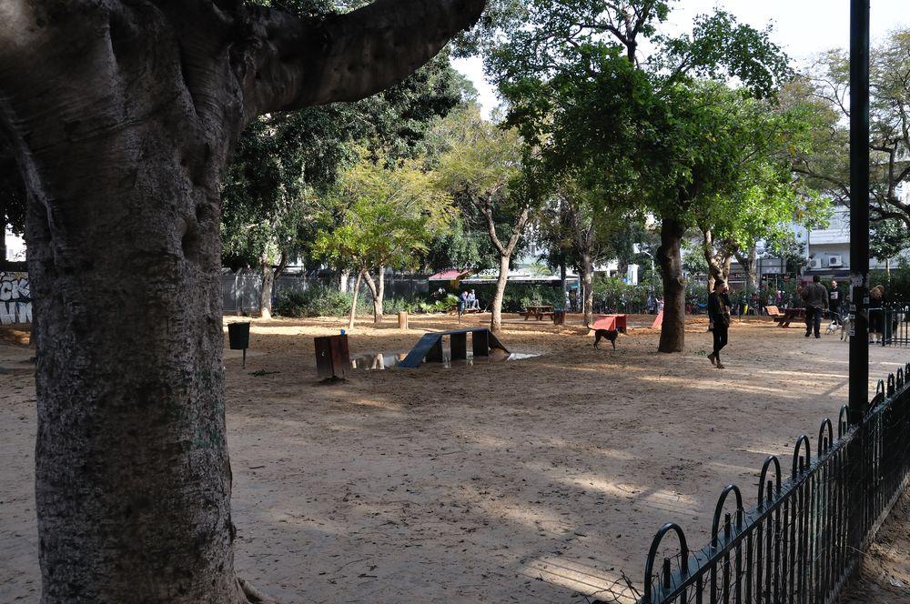 A dog park
