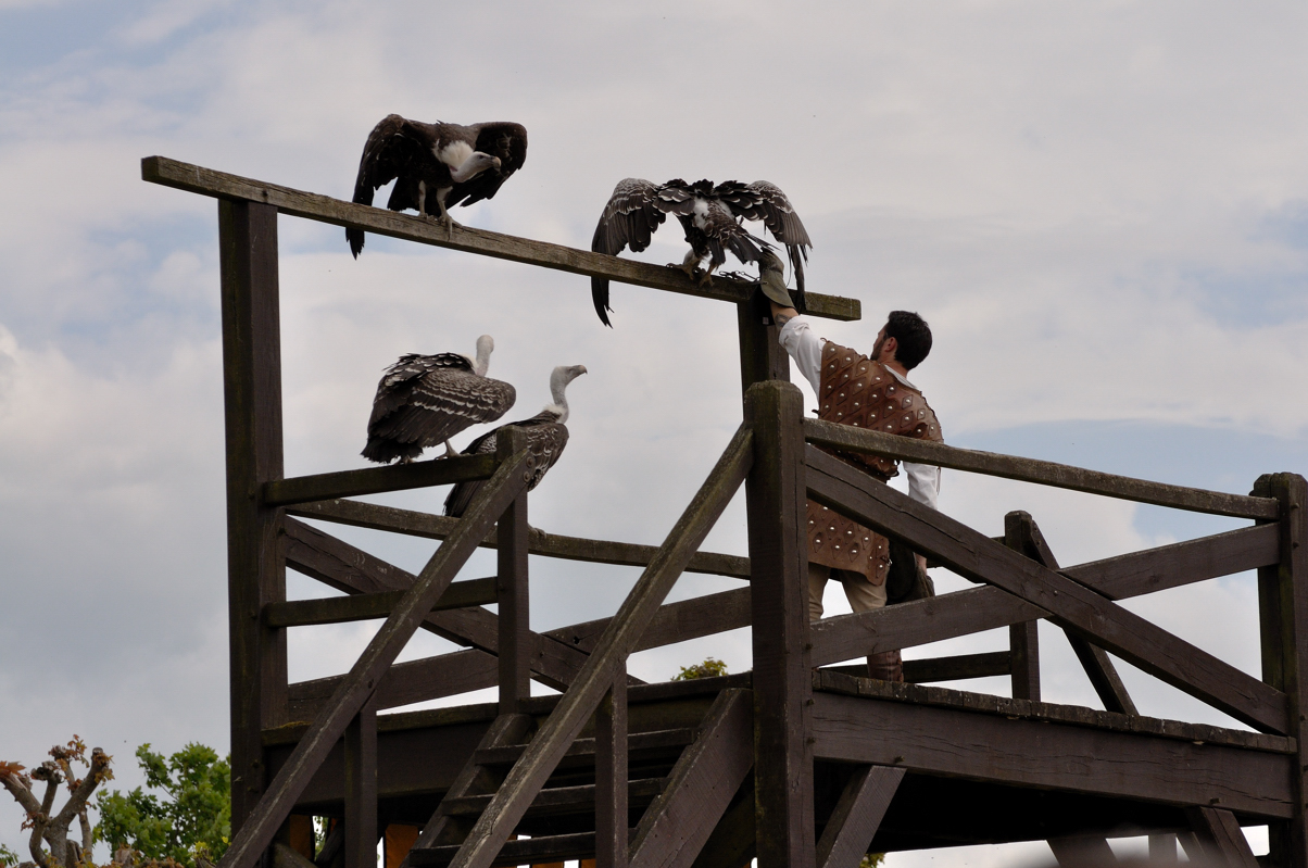 Dernière partie...les vautours