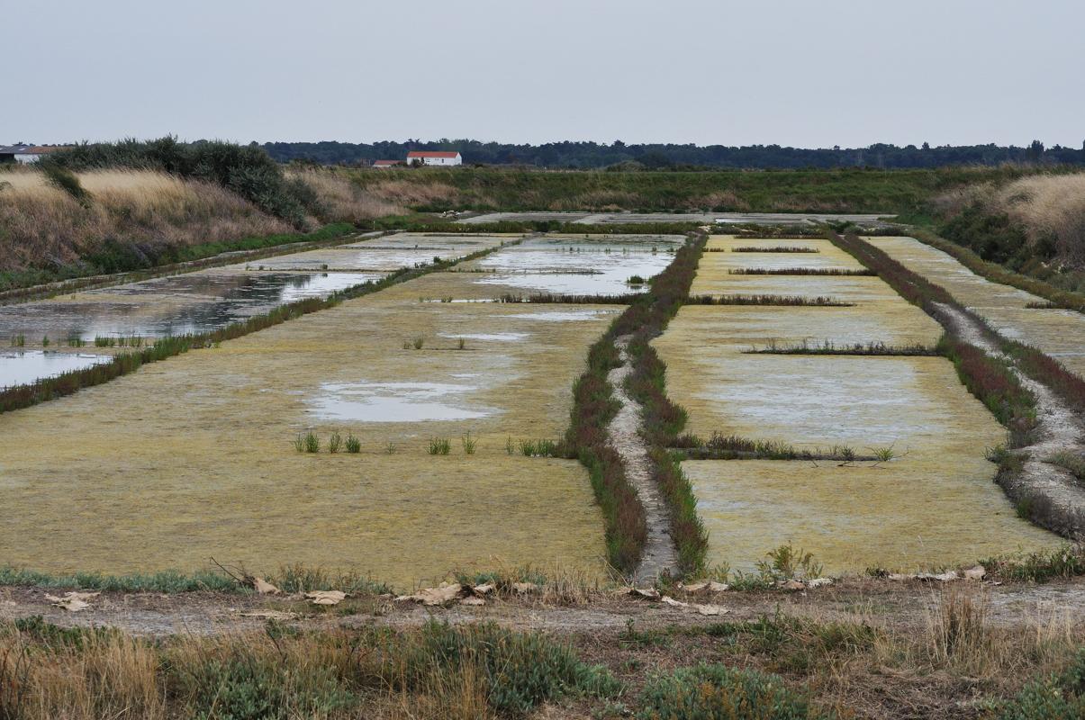Vue générale sur le marais (vasais et métières)